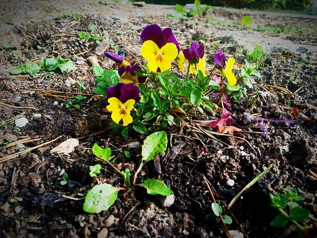 The flowers, they have very extra special powers, they could sit & talk to me for hours 👗 Flower Alice In Wonderland Purple Flowers Freshness Nature Plant Petal Beauty In Nature Blooming Outdoors Purple Flower Nature Photography Yellow Flower Low Angle View Sharp Vibrant Color