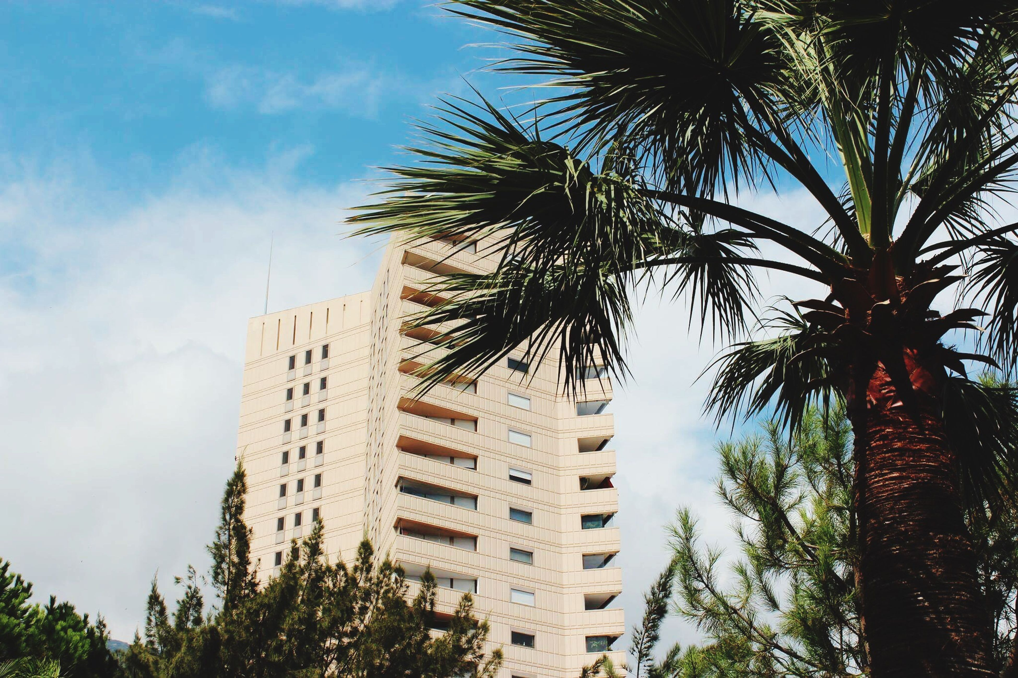 tree, palm tree, growth, building exterior, low angle view, city, architecture, built structure, sky, no people, outdoors, day, cloud - sky, modern, skyscraper, branch, nature