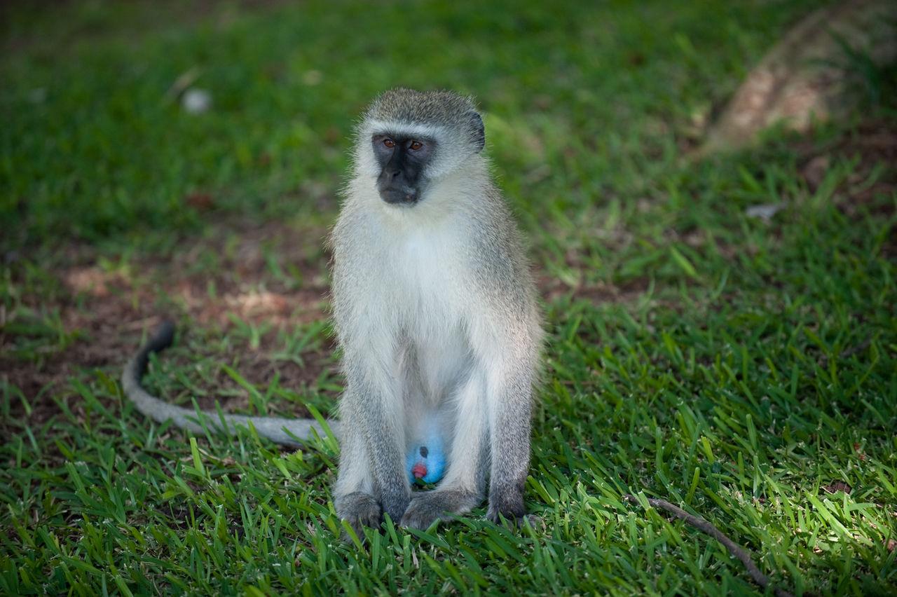 Beautiful stock photos of jungle, Animal, Bird, Environment, Exotic