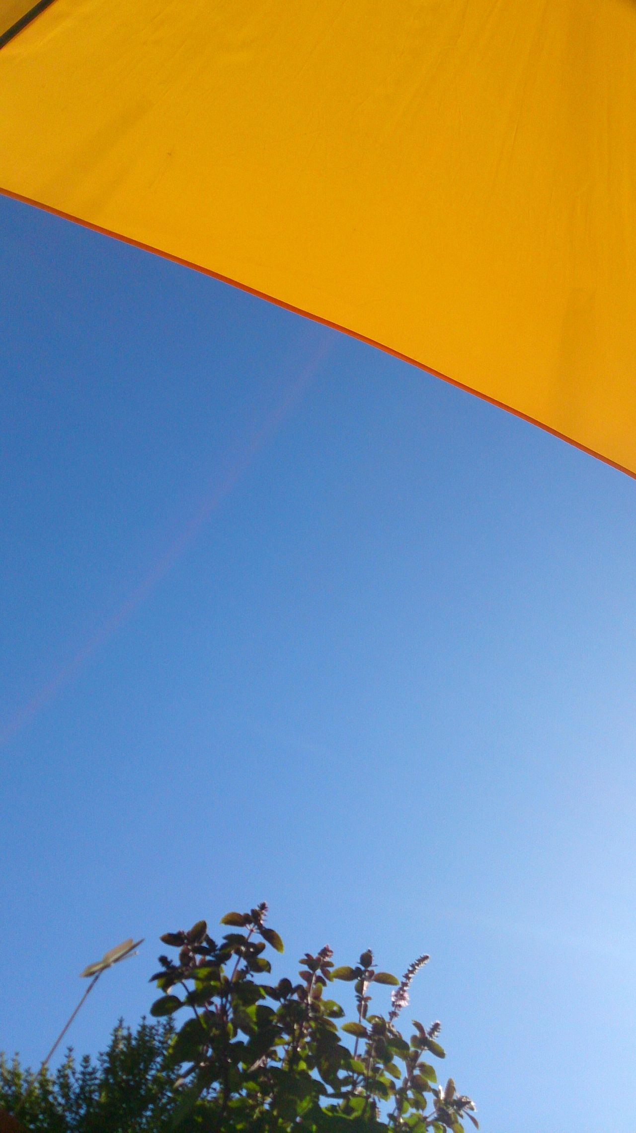 Blue Yellow Clear Sky Outdoors No People Tree Sky Close-up Day Clock Summer Leisure Leisure Time Parasol Textures And Surfaces Pattern, Texture, Shape And Form Colour Geometric Shape Holiday Sun Nofilter Warm Sunbathing Look At The Sky Herb