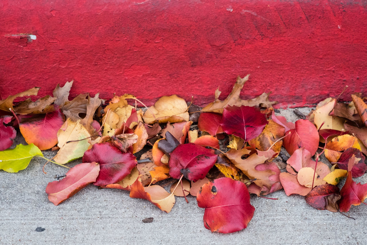 Street beauty Autumn Autumn Collection Autumn Colors Close-up Day Fall Beauty Fall Collection Fort Worth High Angle View Leaves Leaves_collection Maroon No People Red Texas Vibrant Colors