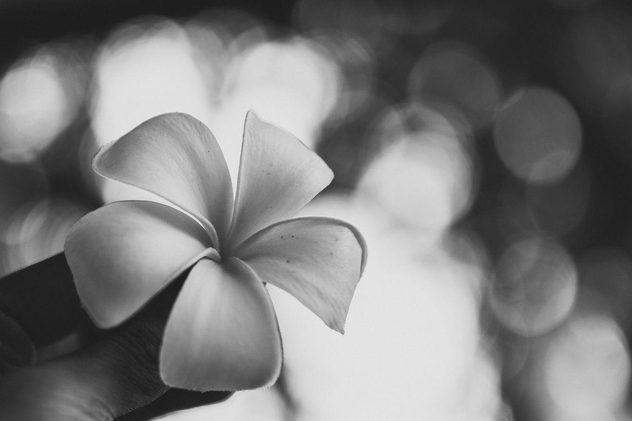 ดอกไม้ (Flower) ขาวดำ คลาสสิค โบเก้ ธรรมชาติ อารมณ์ อารมณ์สีเทา สงบ