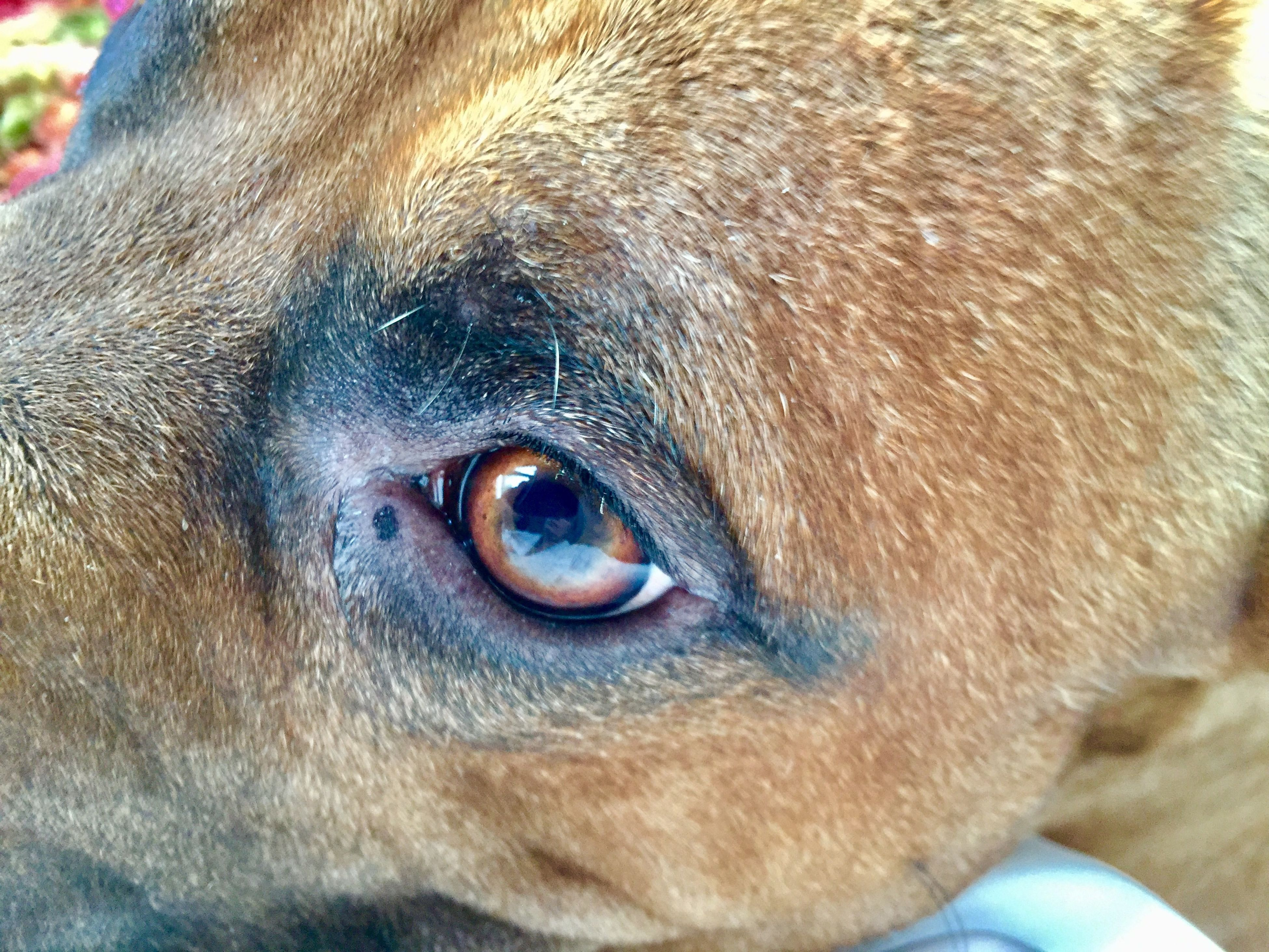 one animal, animal themes, close-up, animal head, outdoors, mammal, day, dog, portrait, animals in the wild, domestic animals, no people, pets, nature, eyeball