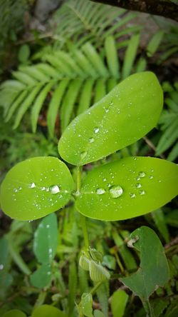 Green Color Nature Growth Leaf Drop Wet Close-up Beauty In Nature Outdoors Freshness Splash