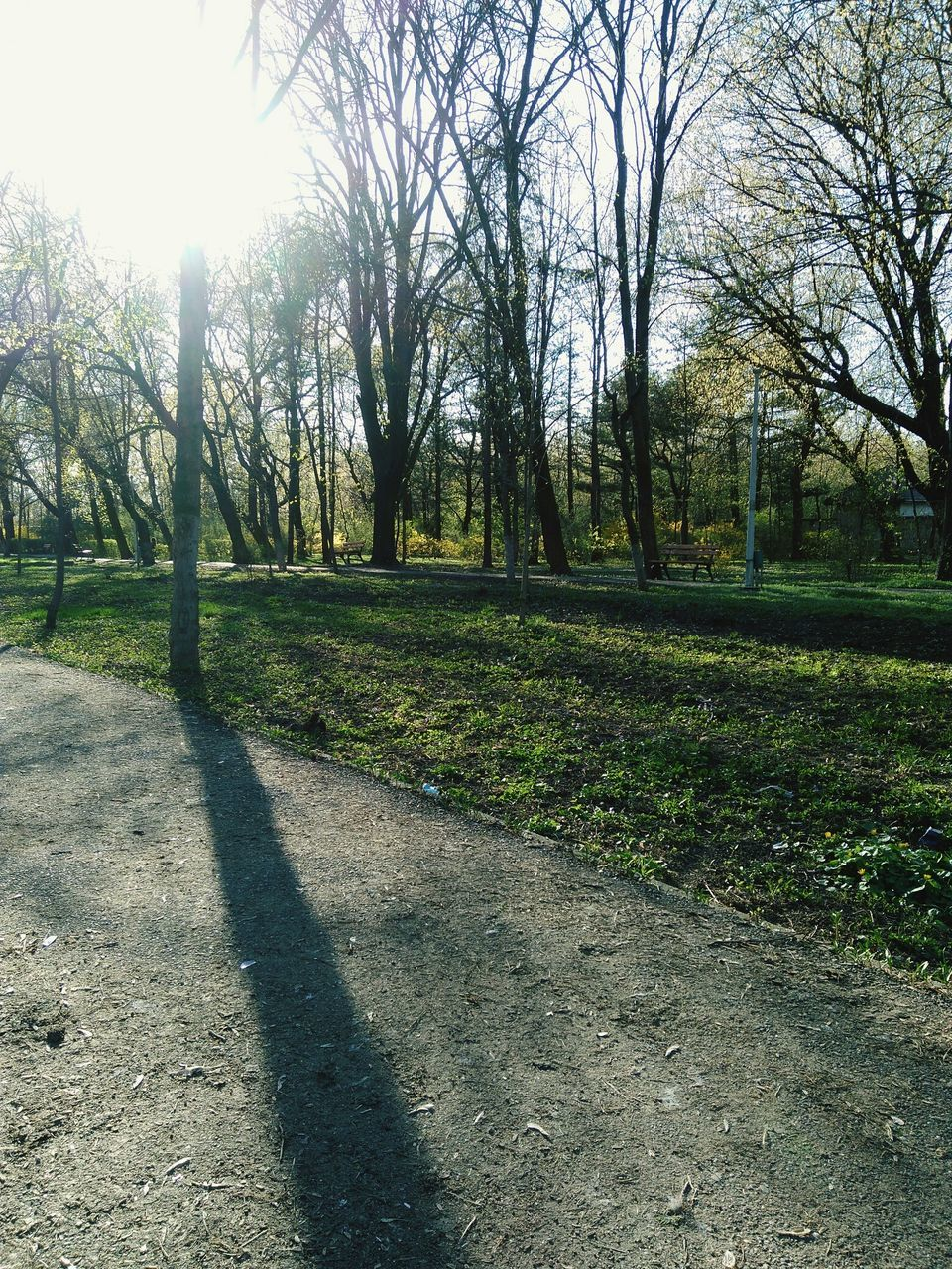 sunlight, shadow, tree, nature, day, tranquility, grass, outdoors, tranquil scene, bare tree, no people, beauty in nature, growth, scenics, branch, sky
