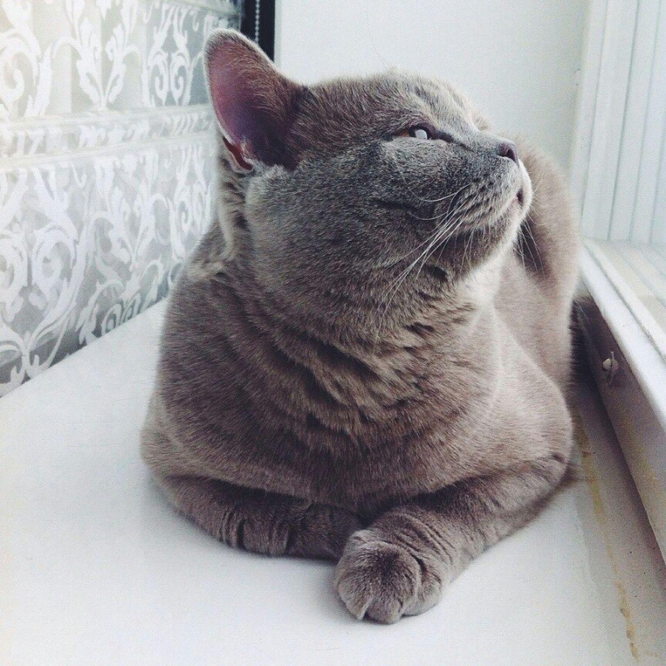Лакомый кот:**** Süüß, Ihr Nutten! :-)♥ Nett Kater Liebe ❤ Liebe