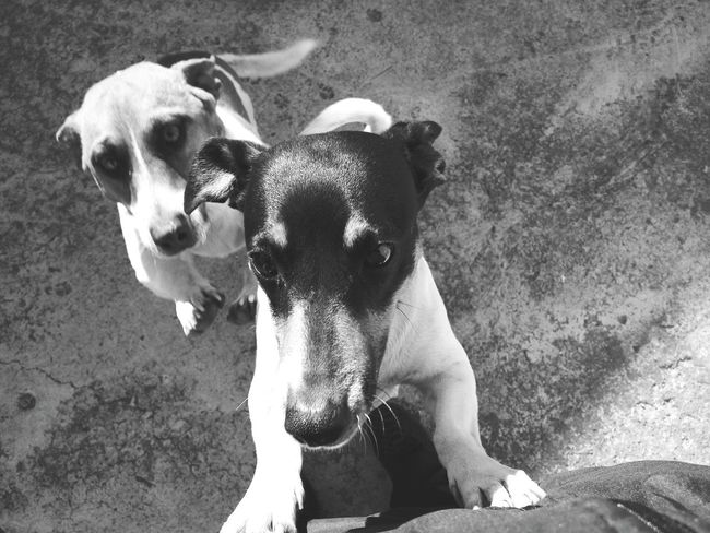 Puppy love, Monochrome Photography Photography, MonochromePhotography