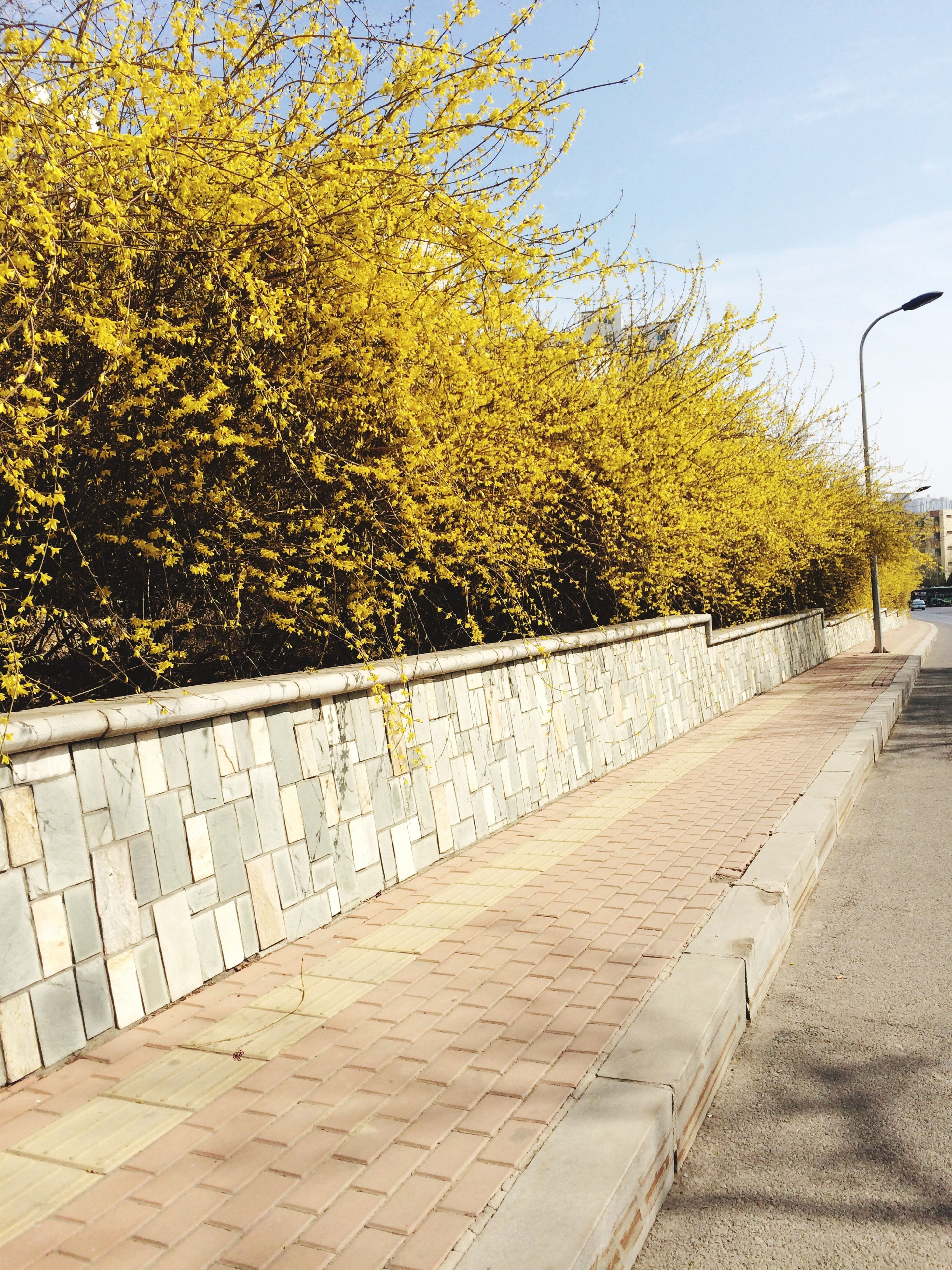 tree, yellow, growth, built structure, the way forward, sky, railing, plant, architecture, sunlight, day, street, outdoors, building exterior, transportation, road, sidewalk, footpath, no people, nature
