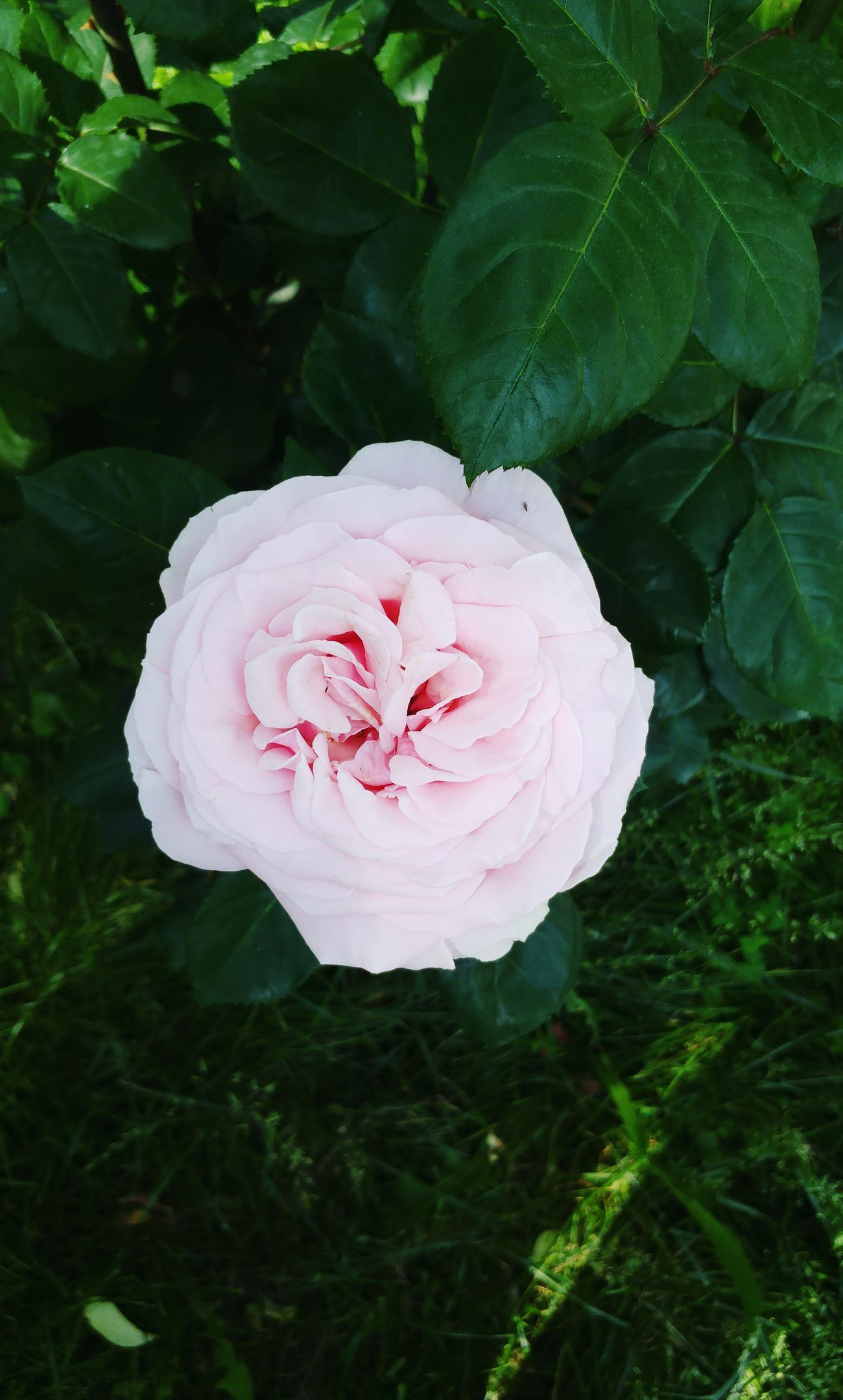 Flower Plant Petal Pink Color Close-up Nature High Angle View Flower Head Growth Day Leaf No People Fragility Directly Above Beauty In Nature Outdoors Freshness Water