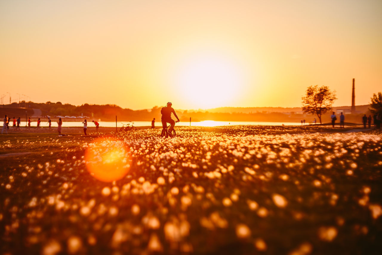 Bike in dandelion field Adult Adults Only Beach Bike City City Spaces Clear Sky Dandelion Field Full Length Leisure Activity Lifestyles Men Nature Only Men Outdoors People Real People Silhouette Sky Sunlight Sunset Togetherness Tree Women The Great Outdoors - 2017 EyeEm Awards