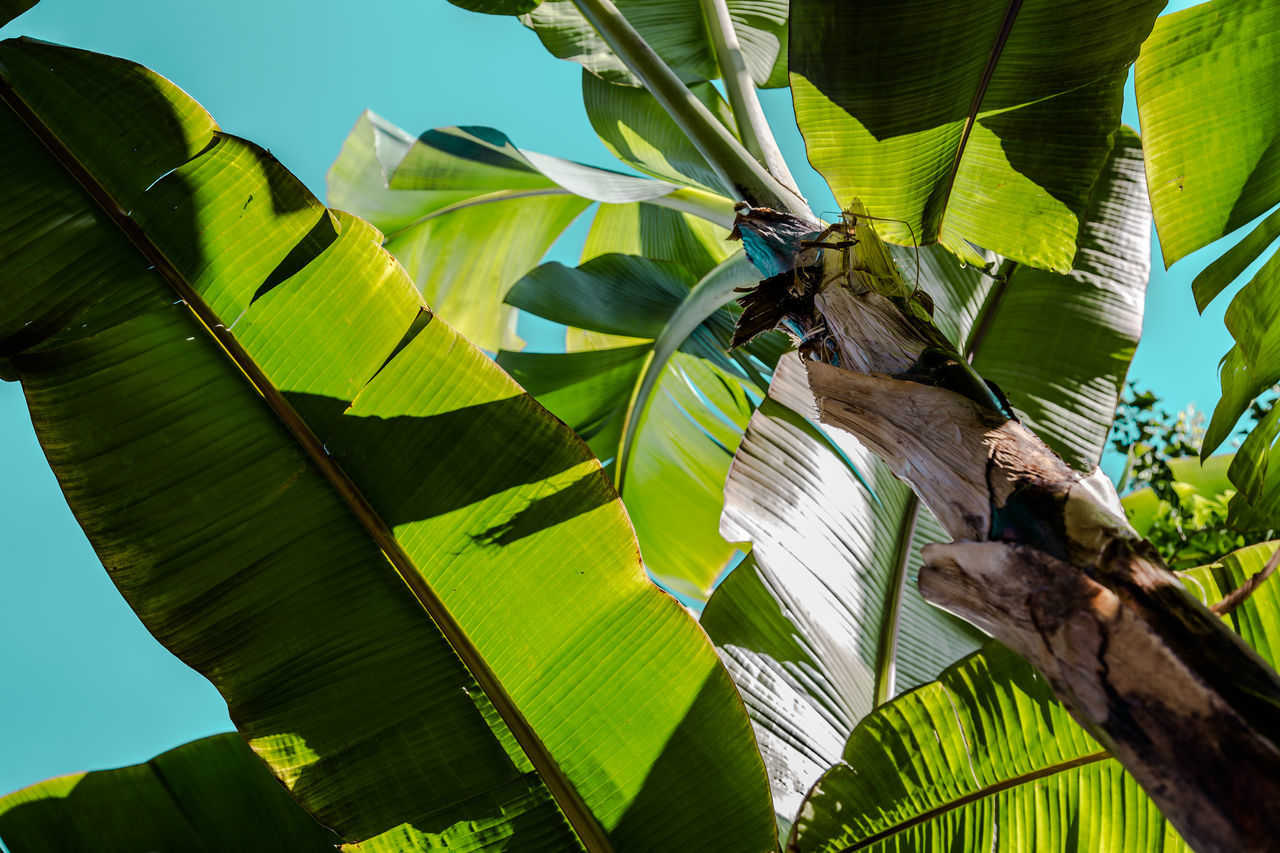 Animal Themes Animal Wildlife Animals In The Wild Banana Leaf Banana Tree Beauty In Nature Butterfly - Insect Close-up Day Green Color Growth Insect Leaf Low Angle View Nature No People Outdoors Sky Sunlight The Great Outdoors - 2017 EyeEm Awards Tree
