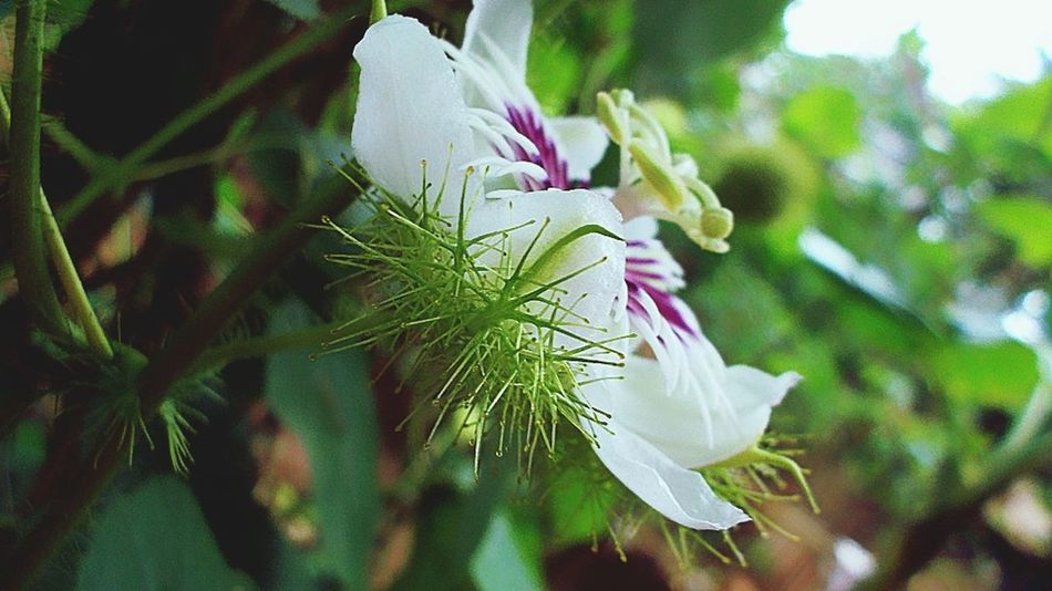 Wildflowers SaveAForest_HumpATree INDONESIA Traveling