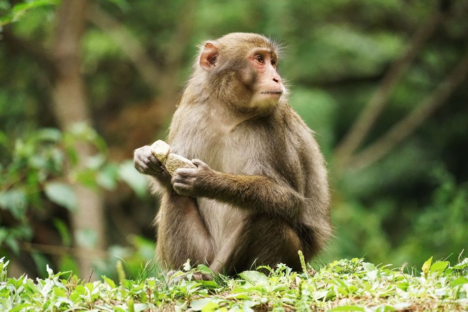 Beautiful stock photos of monkey, Animal Themes, Animal Wildlife, Animals In The Wild, Day