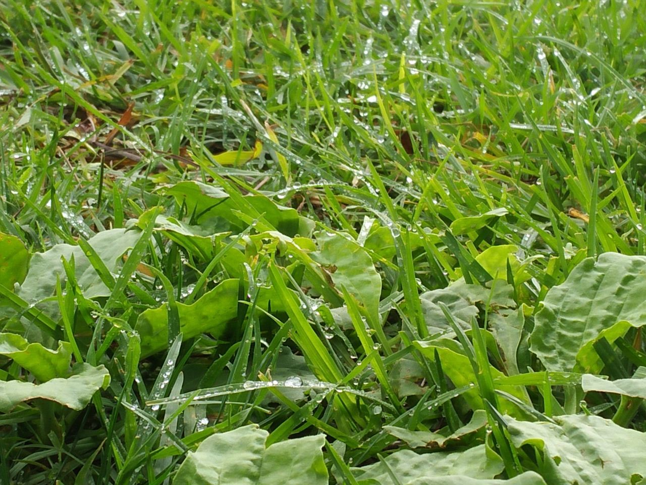 After rainy days mother nature shows her beauty. Nature Growth Grass Close-up Water Drops Mother Nature Beauty Bright Green Grass Beauty In Nature Plant Field Backgrounds