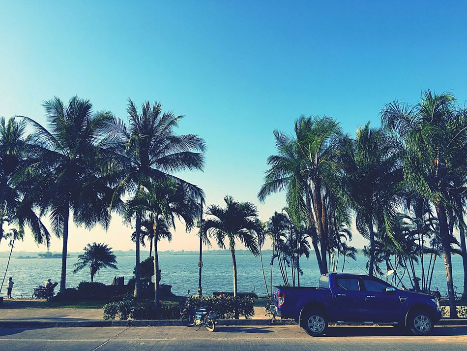 Palm Tree Tree Transportation Mode Of Transport Land Vehicle Blue Beach Clear Sky Car Sea Outdoors Day Nature Sky No People Growth Nautical Vessel Water Beauty In Nature Palm Frond
