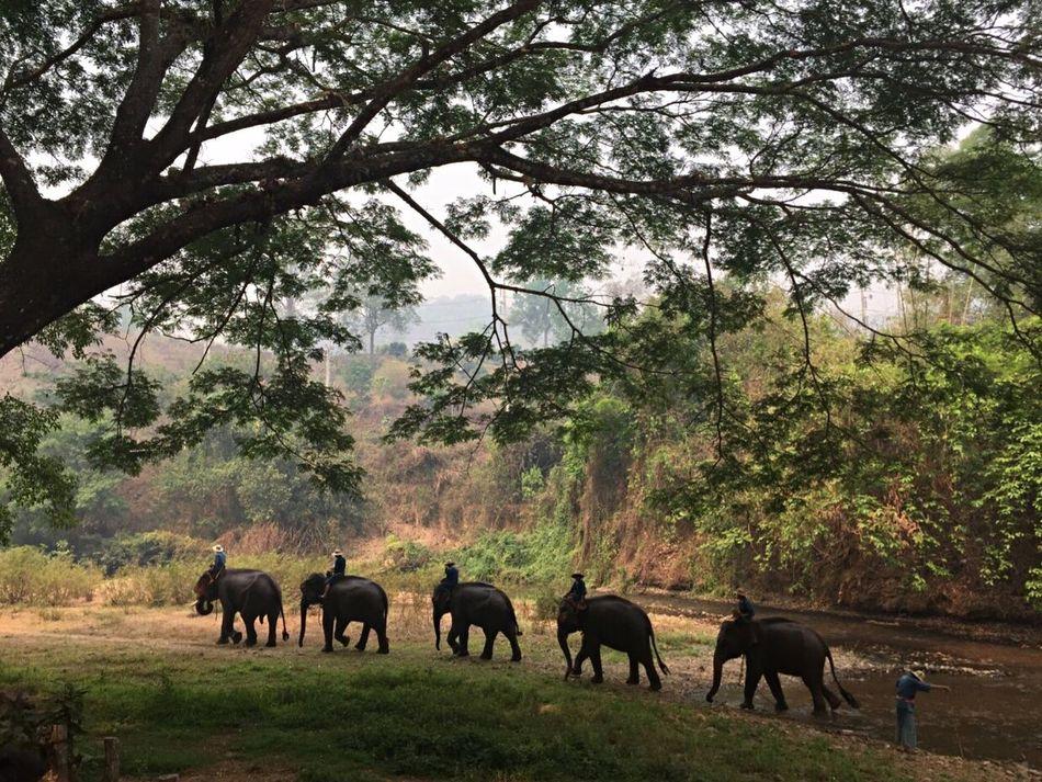The elephants of Chiang Mai Chiang Mai | Thailand Chiang Dao