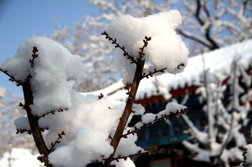 Beauty In Nature Close-up Day Focus On Foreground Growth Nature Outdoors Season  Sky Tranquility Weather 大观园 Season  Cold Temperature Beijing Pekin Life