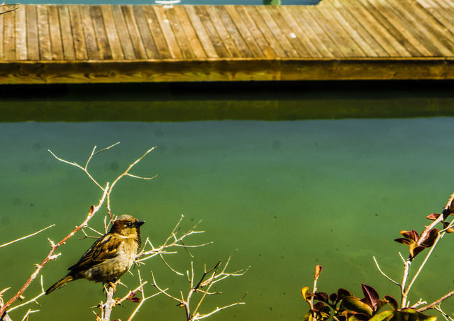 Animal Themes Animal Wildlife Animals In The Wild Bird California Close-up Day Fun Hanging Out Harbor Nature Nature Nature Photography No People Outdoors Soothing Water
