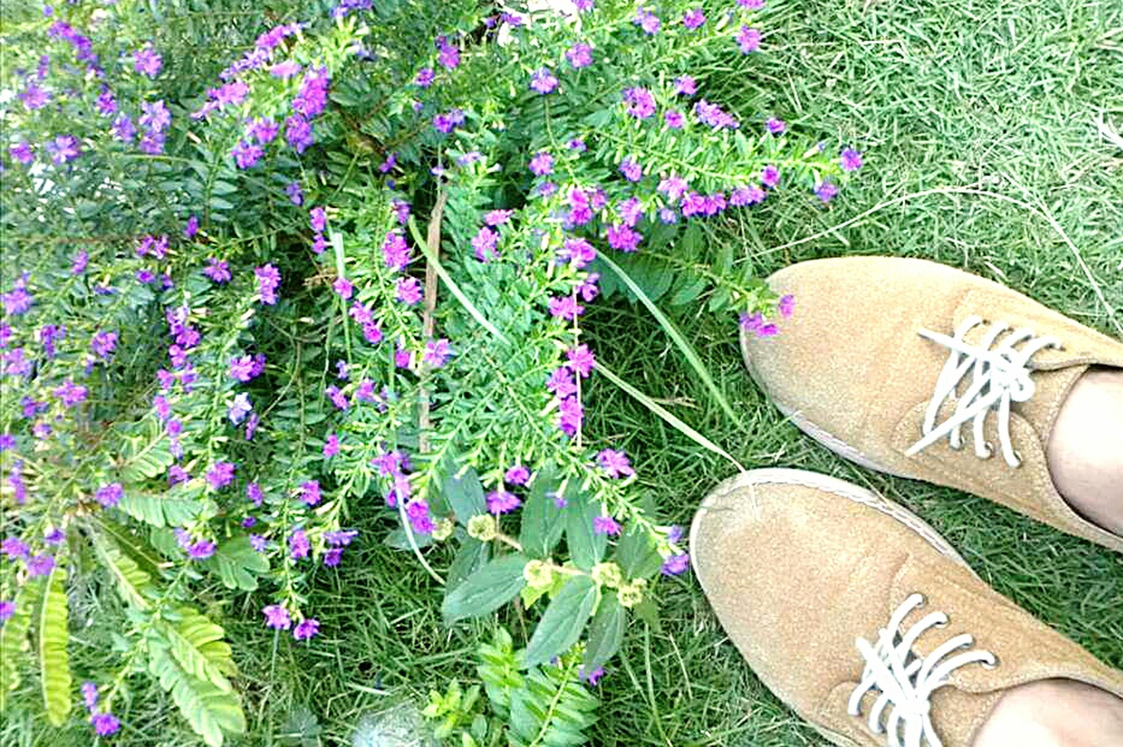 high angle view, flower, growth, low section, shoe, personal perspective, grass, field, person, plant, outdoors, nature, leaf, day, sunlight, part of, freshness