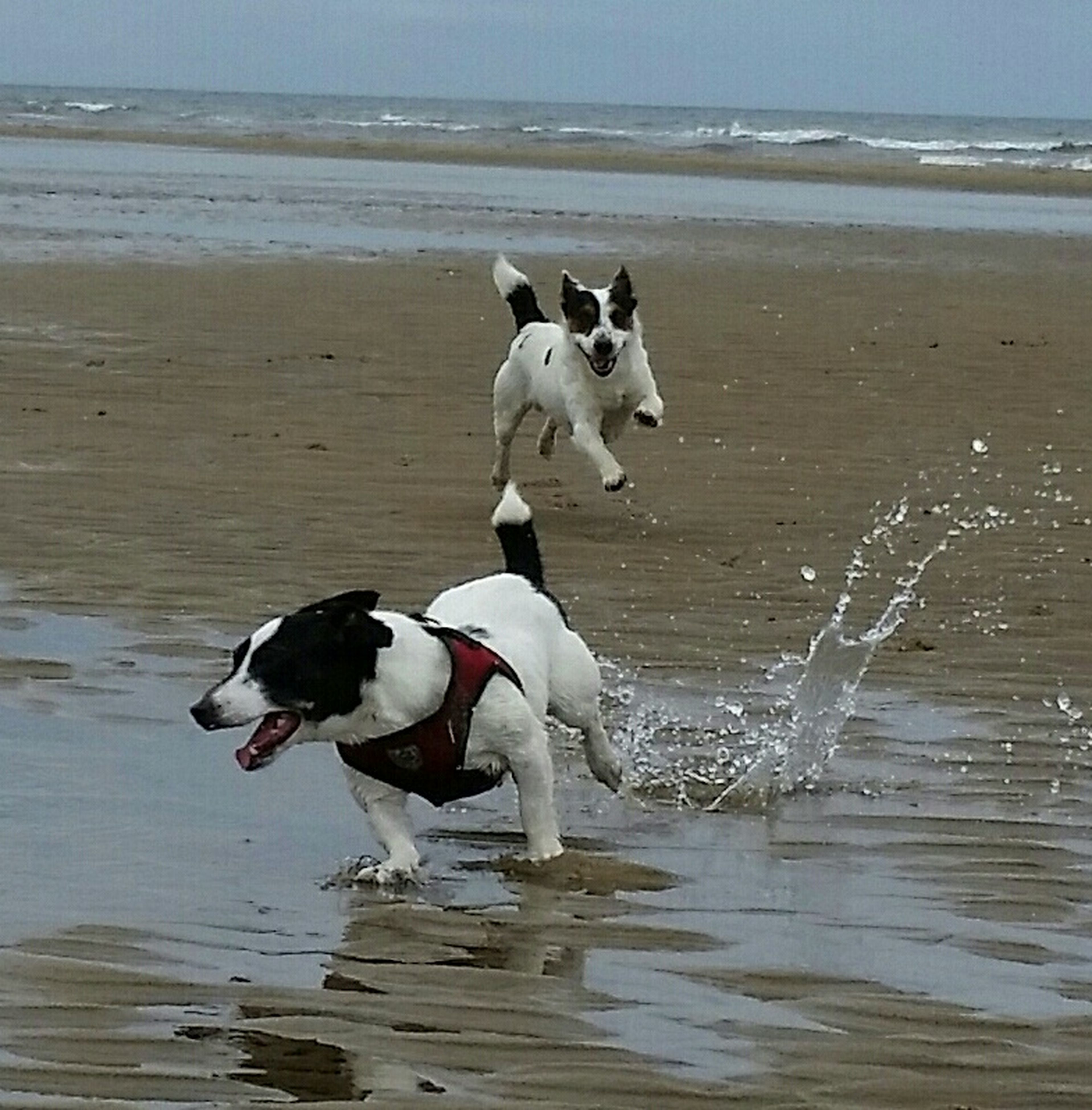 water, sea, beach, horizon over water, sand, shore, animal themes, wave, nature, full length, beauty in nature, vacations, tranquility, dog, bird, tranquil scene, domestic animals, scenics, idyllic, day