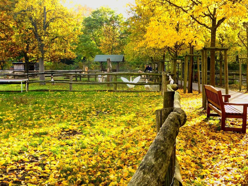Tree Autumn Change Nature Growth Yellow Beauty In Nature Leaf Outdoors Scenics Real People Branch People Adult Day Bird Goose Wings Spread Wings Fly Flying Sunny Love Hometown Perspective