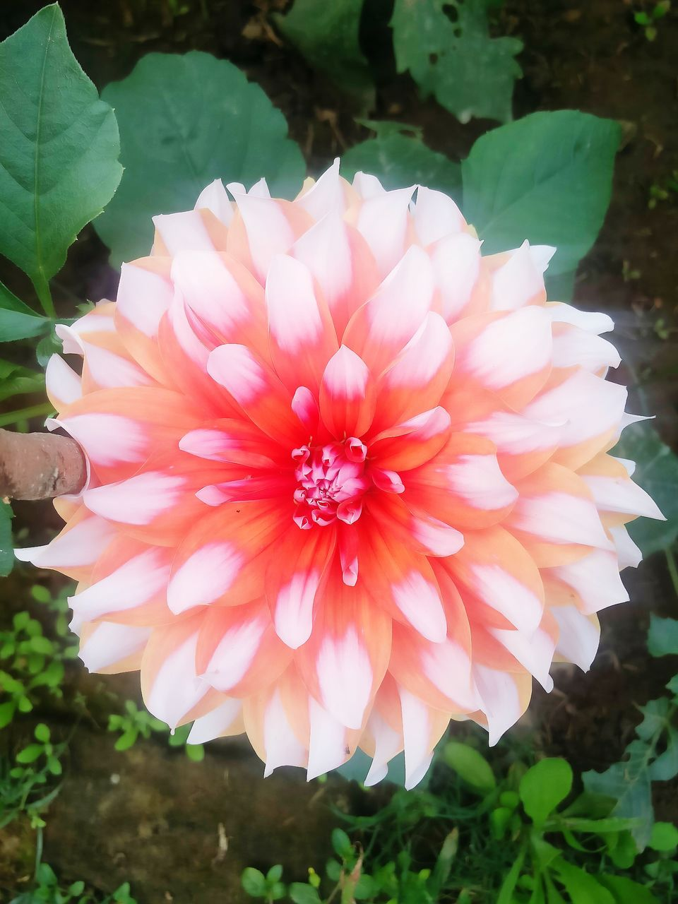 flower, petal, flower head, fragility, nature, beauty in nature, plant, freshness, outdoors, growth, day, close-up, no people