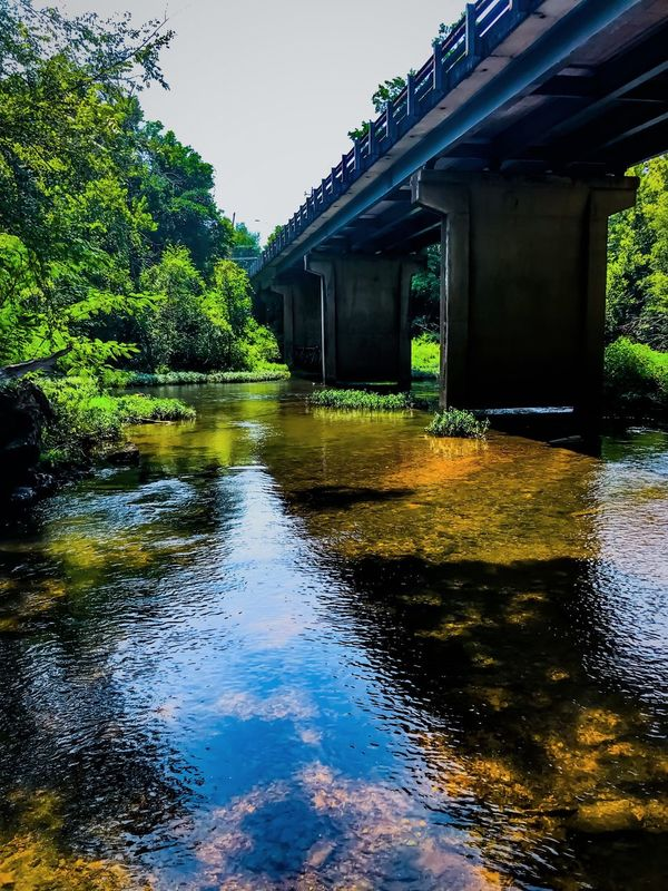 Water Architecture Built Structure River Tree Day Bridge - Man Made Structure Outdoors Waterfront Connection No People Nature Building Exterior Beauty In Nature Sky
