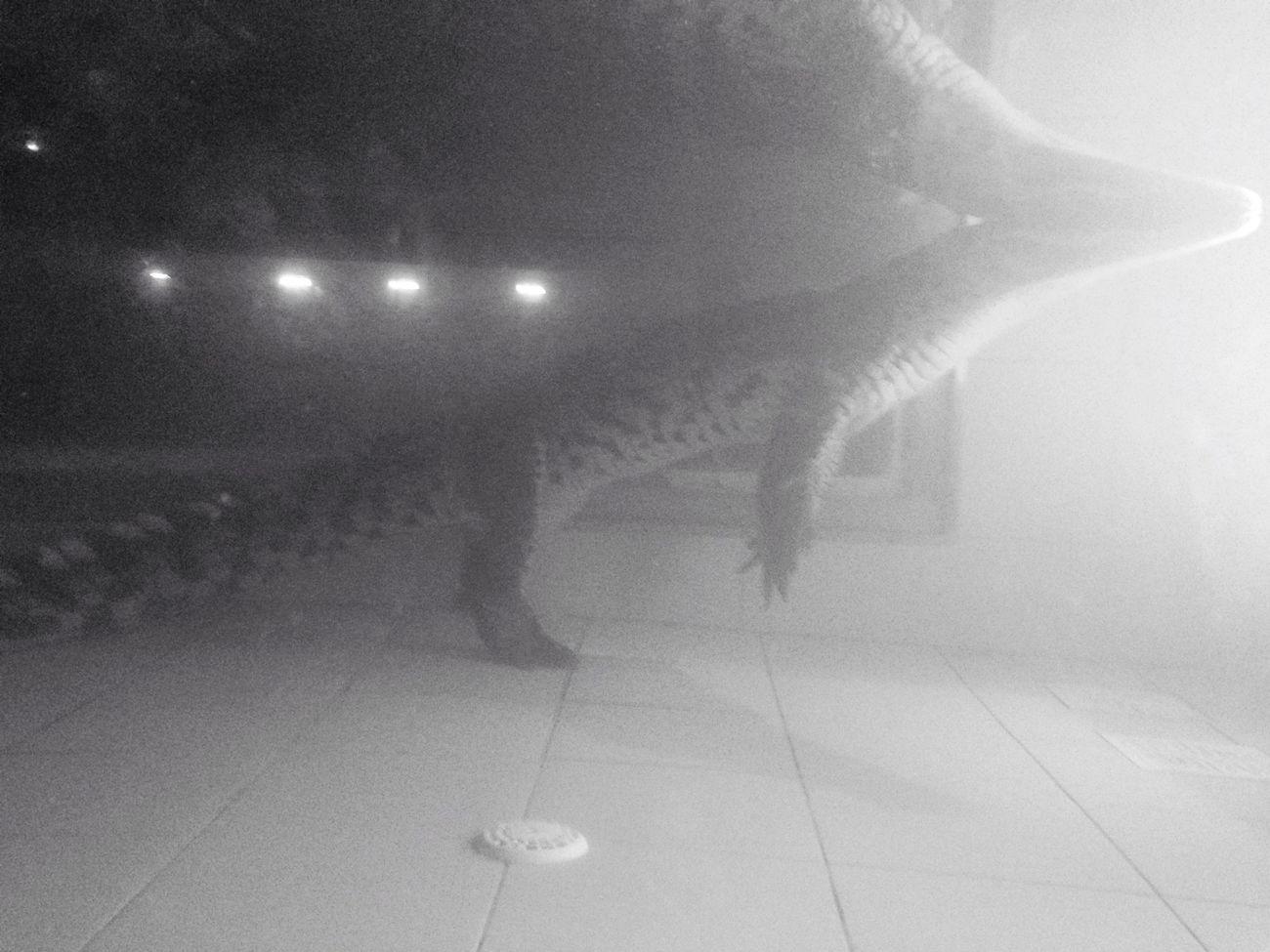 Κροκόδειλος ο κρητικος Hanging Out