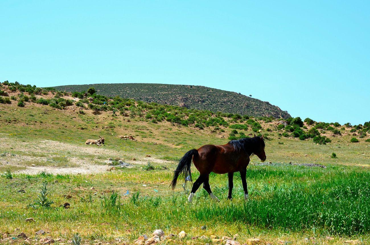 Horse Nature Quiet Calm Great Morocco Green Louktou Beauty Spring Into Spring Spring