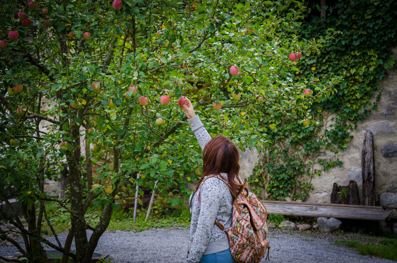Beautiful stock photos of apple, Apple - Fruit, Apple Tree, Casual Clothing, Day