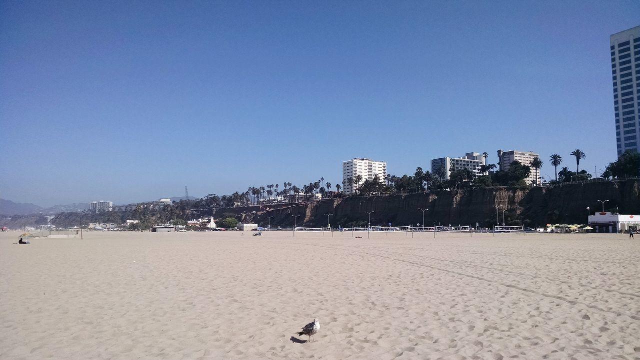 Take Me Away, let's go to La! Santa Monica Beach Palms Seagull USAtrip Staring Me Down... Urban Lifestyle