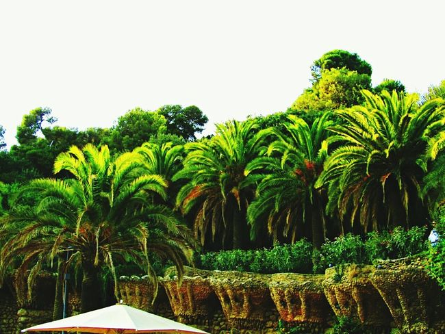 Beauty In Nature Beautifulview Palmtrees Green Relaxing Taking Photos Todayphotography Landscapephotography Naturephotography Eyeemcollection Eyeemphotography Colorful SPAIN Barcelona Parkguell From My Point Of View EyeEm Nature Lover My Favorite Place