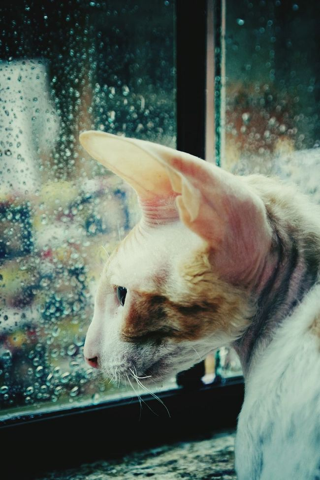 Nature On Your Doorstep Animal Photography Rain Moments CRX Cornishrex