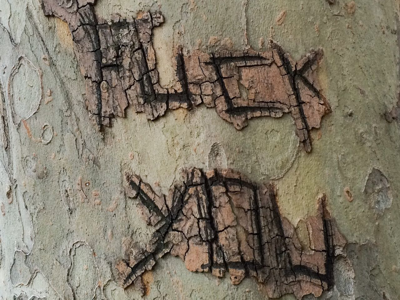 Offensive Text On Tree Trunk