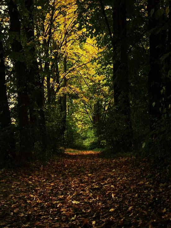 Autumn Trees Road Walking Alone...