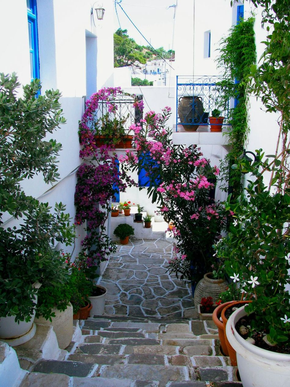Alley House Village Picturesque Flowers Plants No People Houses Greek Islands Flower Pots Lefkes Paros Island Summer Memories 🌄 Yeah Springtime! Pastel Power