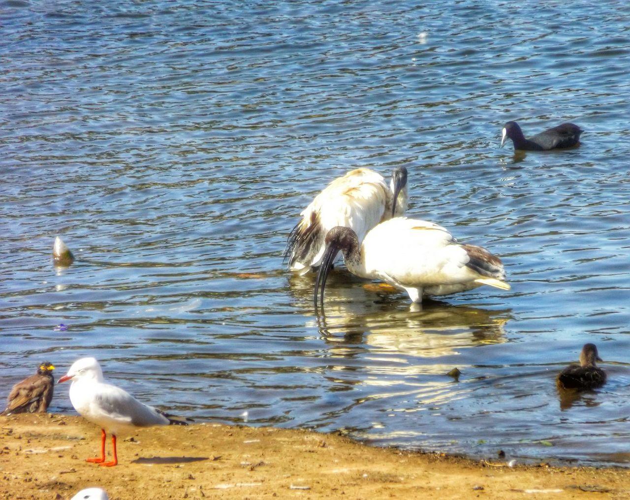 Walking Around Enjoying The Sun Birds Lake