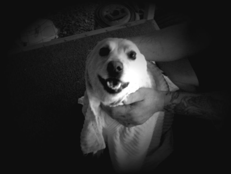 Taking Photos No People, Outdoors Riverside California California Daytime Wet Dog Dog Bath Bath Time Black And White Black And White Photography Drying Off Happy Dog Dog Smiles Clean Dog Home Is Where The Art Is Eyemphoto Monochrome Photography Monochrome