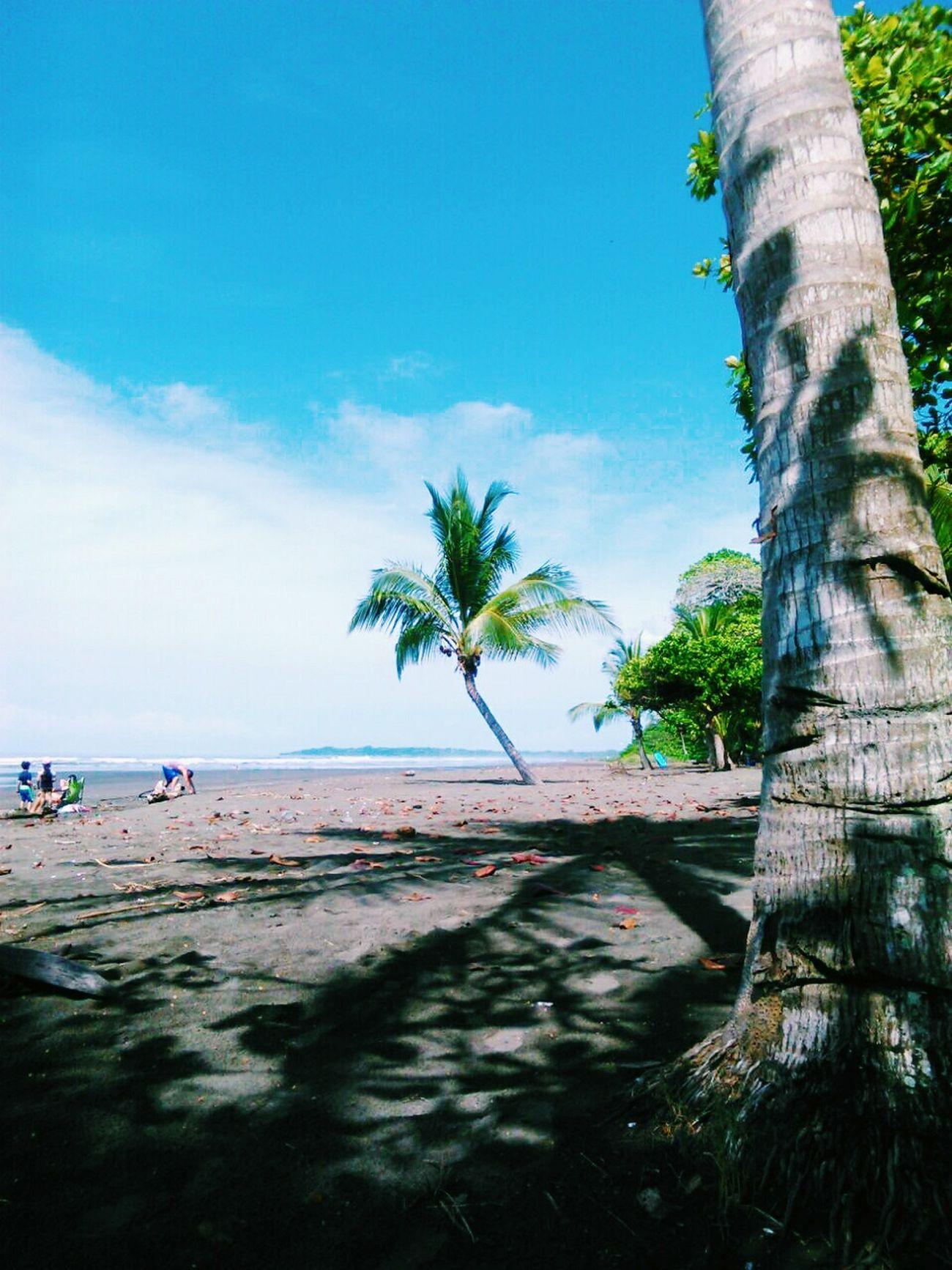 Costa Rica Pura Vida ✌ Nature Cloud - Sky Majestic Water Relaxing Green Color Beach Sun Tropical Climate Palm Tree 🌴