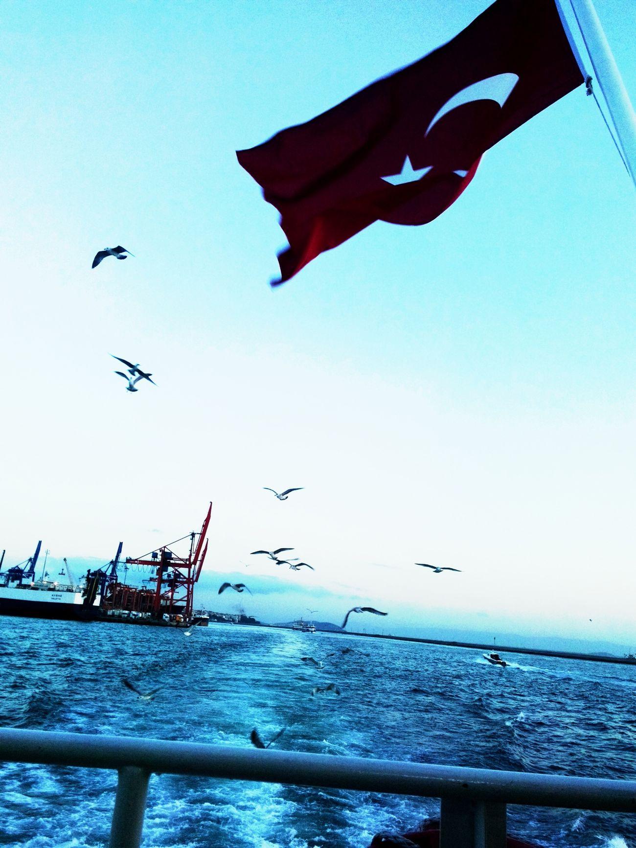 Yok böyle güzeli ? Always Love Istanbul First Eyeem Photo