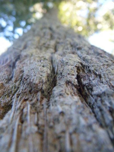 Tree Bark Brown Upward View Up A Tree Upward Green Sky Light Leaves