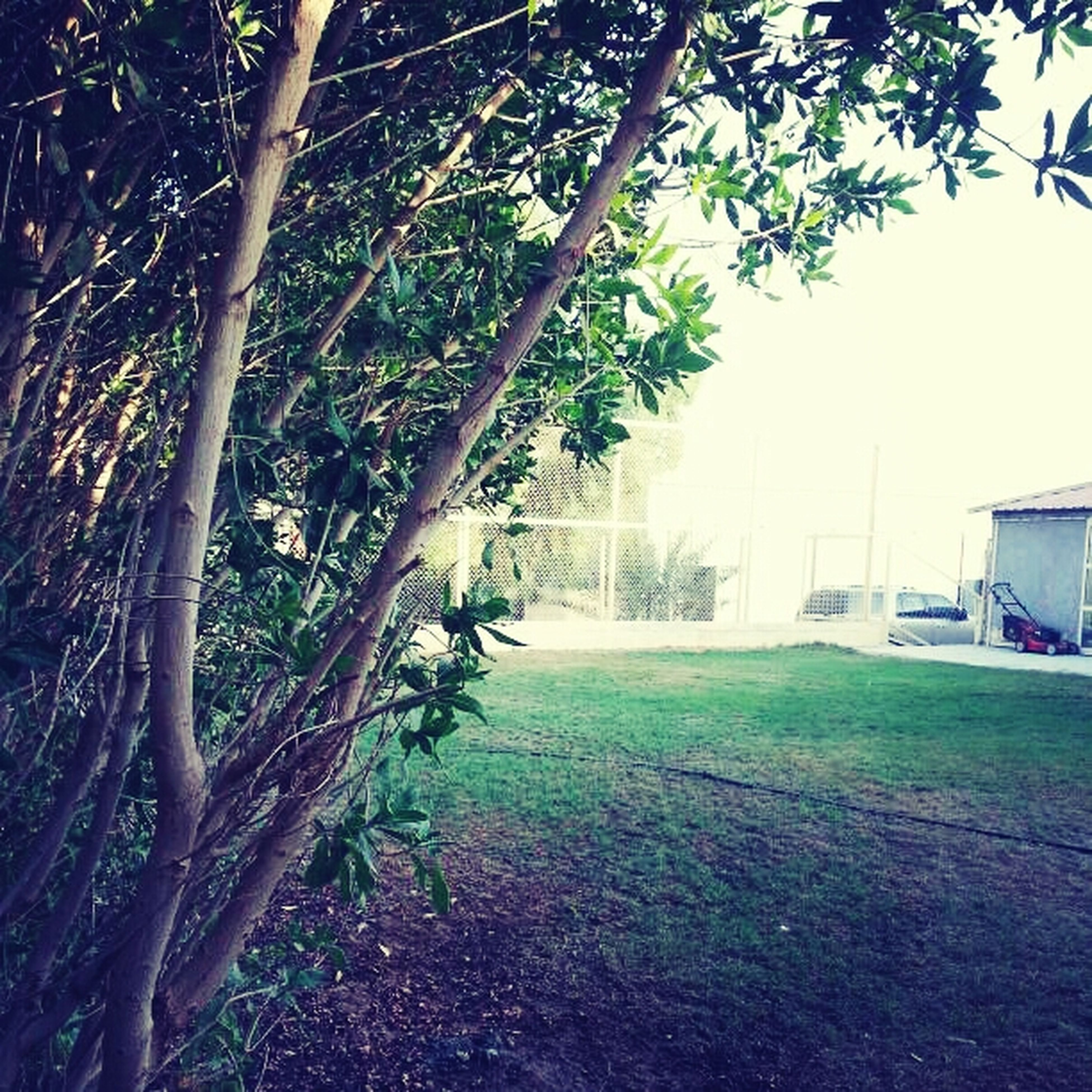 tree, branch, grass, tree trunk, growth, built structure, nature, park - man made space, building exterior, architecture, tranquility, green color, sunlight, day, outdoors, footpath, field, no people, shadow, beauty in nature