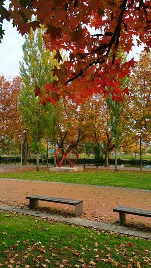 Autumn Autumn Colors Autumn Leaves Autumn🍁🍁🍁 Autumn 2015 Autumn Collection Hearts Benches Trees Tree Changing Colours Chaves Portugal Vivertrasosmontes Trásosmontes Portoenorte