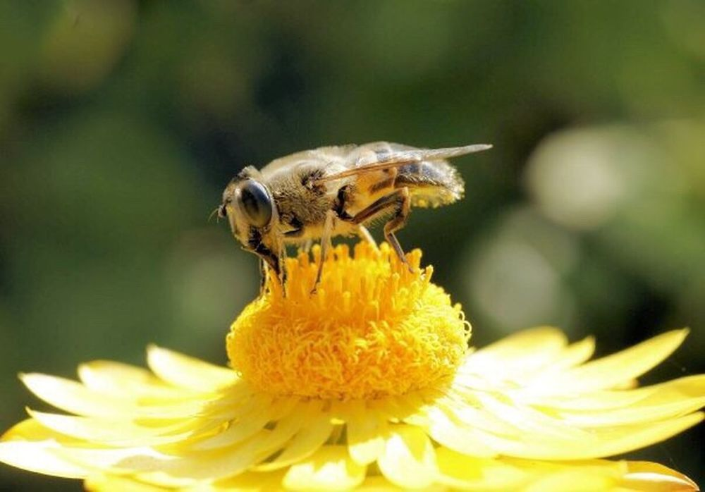 Paint The Town Yellow Flower Insect Animals In The Wild Animal Themes Yellow Fragility Petal One Animal Bee Freshness Pollen Animal Wildlife Growth Flower Head Pollination No People Beauty In Nature Plant Honey Bee Focus On Foreground