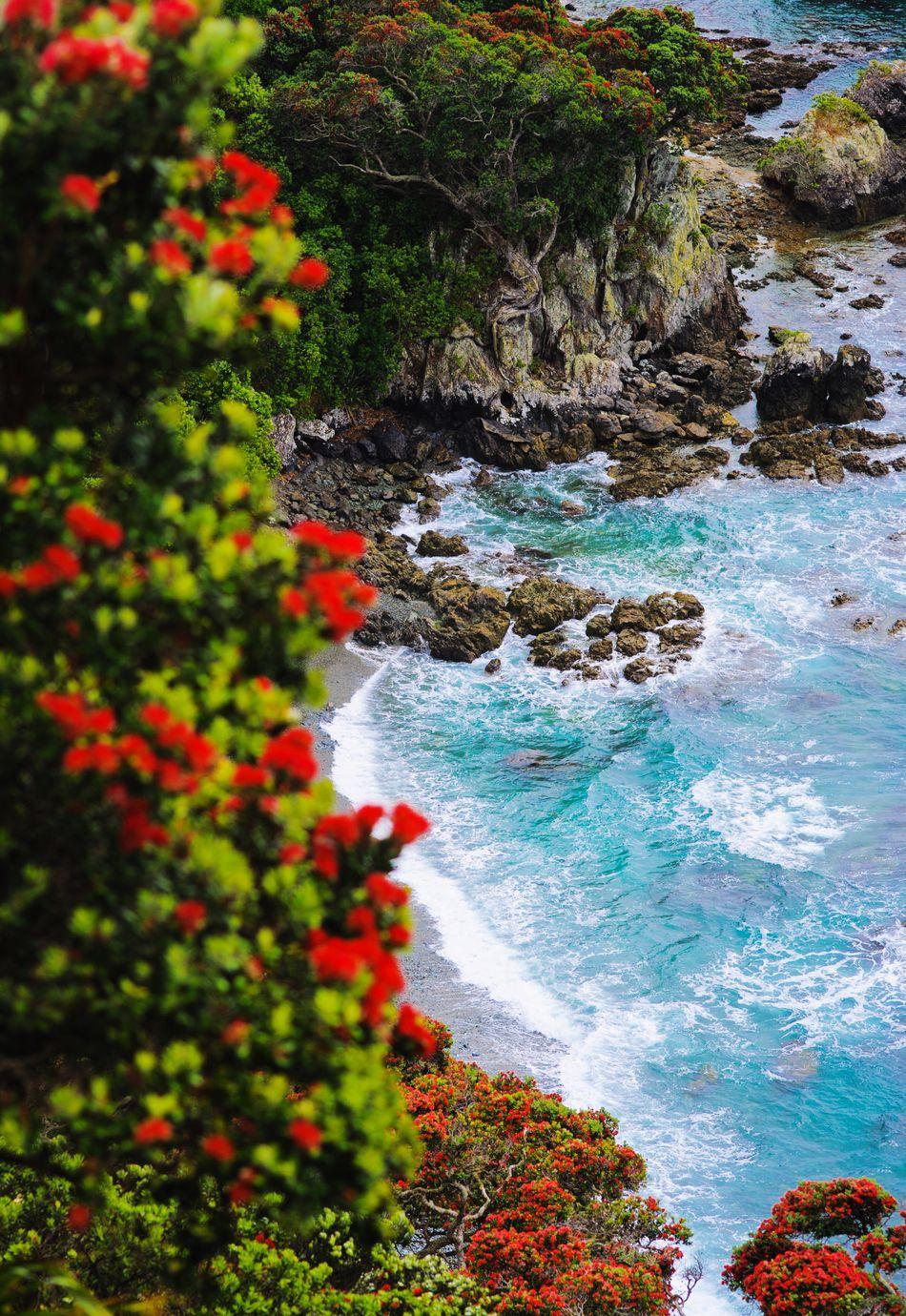 Tiritiri Pohutukawa Coast Coastline Coast Shoreline Beach Cliffs New Zealand Scenery Ocean