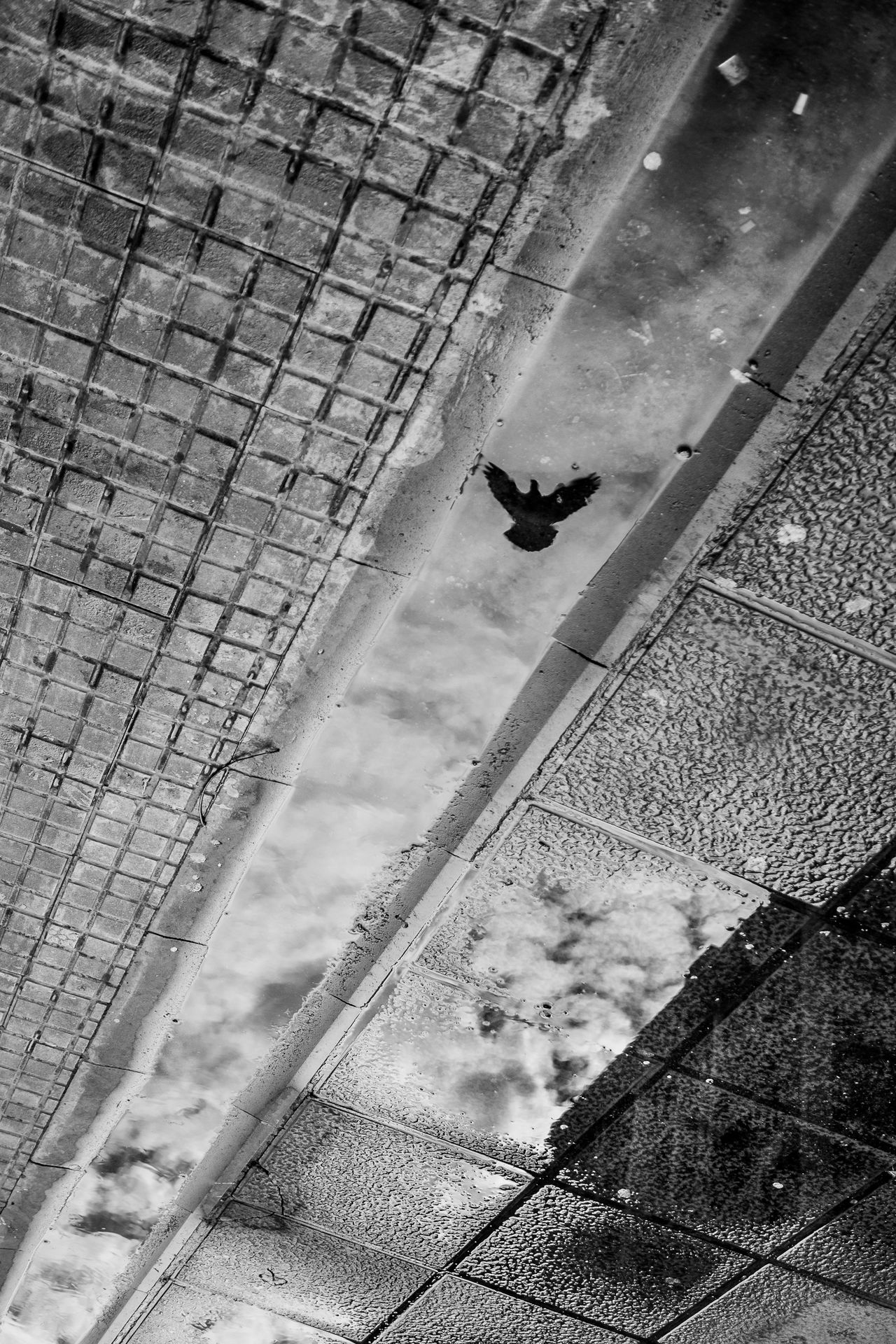 Things I See Fragments Of Life Street Pigeon Reflection Sidewalk The City Light