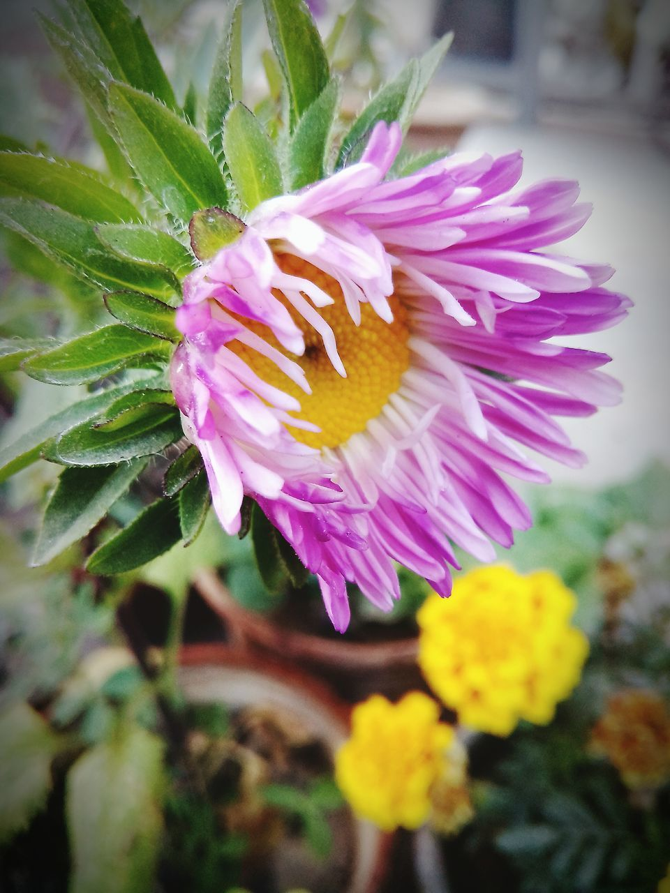 flower, petal, fragility, nature, beauty in nature, flower head, freshness, growth, plant, purple, no people, close-up, day, outdoors, one animal, blooming, focus on foreground, leaf, pink color, animal themes