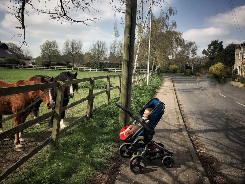 Domestic Animals Outdoors Landscape Animal Themes Small And Big British Britain England Baby Stroller Pushchair Horse Horses Village Village Life Rural Scene Rural Rural Life