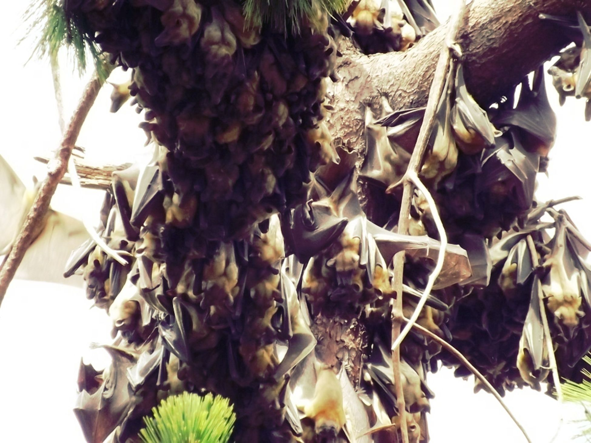 leaf, food, food and drink, close-up, healthy eating, growth, freshness, fruit, dry, tree, low angle view, hanging, nature, pine cone, abundance, plant, day, no people, bunch, outdoors