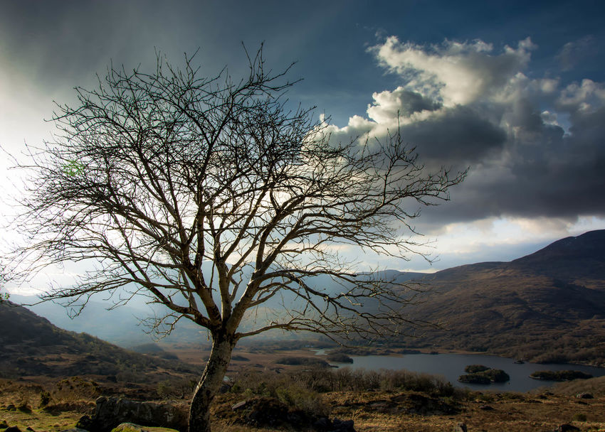 Killarney moods.. Atmospheric Mood Check This Out Enjoying The View Eye4nature Eye4photography  EyeEm Best Shots EyeEm Nature Lover Ireland Landscapes With WhiteWall Landscape Mood Mountains Nature Nature_collection Open Edit Rain Rainfall Ring Of Kerry Sky Sky And Clouds Skyporn Spring The Great Outdoors - 2016 EyeEm Awards The Great Outdoors With Adobe Tree